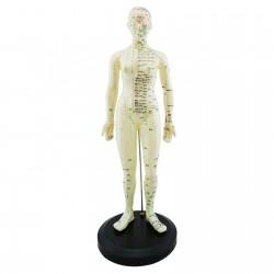 Model akupunkturowy człowieka - 45 cm