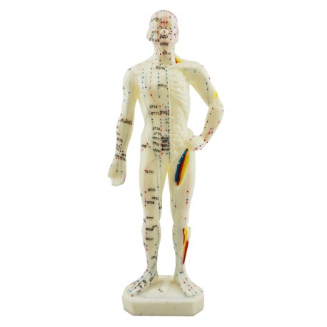 Model akupunkturowy człowieka - 28 cm