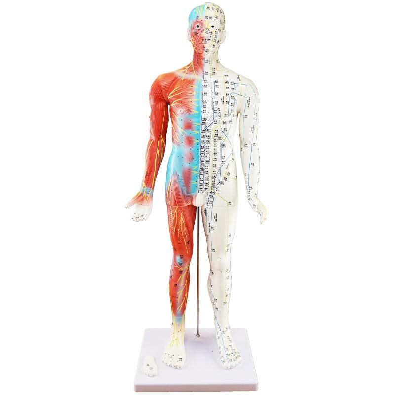 Model akupunkturowy człowieka - 85 cm
