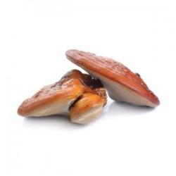 Reishi Suplement diety