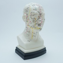 Model akupunkturowy głowy - 22 cm