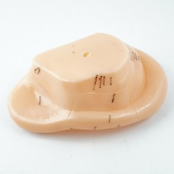 Model akupunkturowy ucha - 17 cm