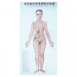 Zestaw 3 plakatów - kobieta - 72 x 38 cm