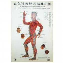 Zestaw 3 plakatów - mężczyzna - 37 x 26 cm