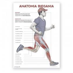 Plakat anatomiczny - anatomia biegania - 50 x 70 cm