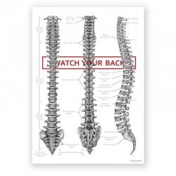 Plakat anatomiczny - kręgosłup - 50 x 70 cm