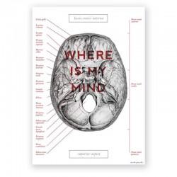 Plakat anatomiczny - czaszka - 50 x 70 cm
