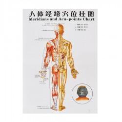 Plakat człowieka - tył - 76 cm x 47 cm