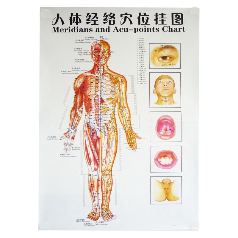 Plakat człowieka - tył - 63 cm x 45 cm